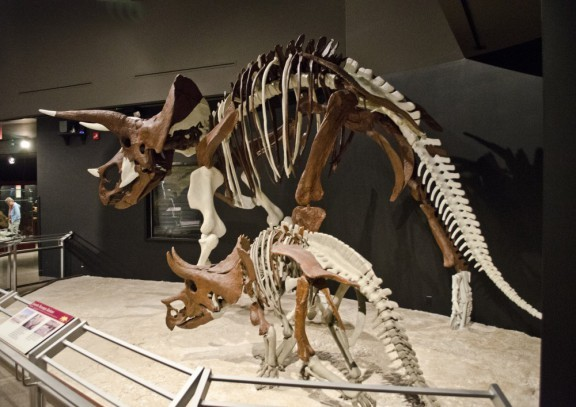 Trumpeting a Dinosaur Horn