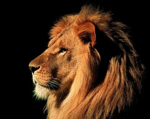 Representing Almighty - Lion