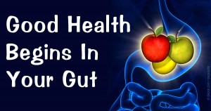 Modern diet destroys gut health