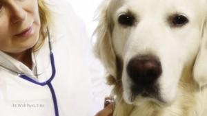 Homeopathic vet