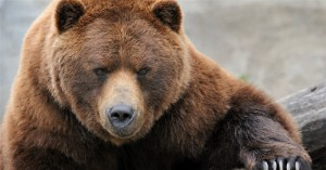 Creationists cheer findings in bear