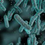 Swimming bacteria defy Darwin