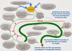 The link between gut bacteria