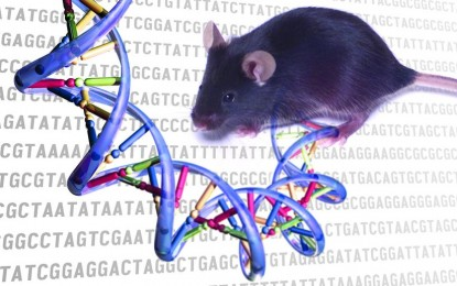 Genetic researchers reverse wrinkles, gray hair and balding in mice, called 'unprecedented'