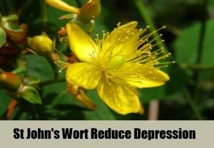 How St. John's wort