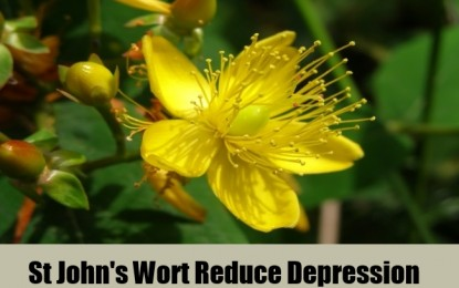How St. John's wort helps relieve depression
