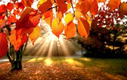 Thanksgiving: Echoing the Grace ofGod