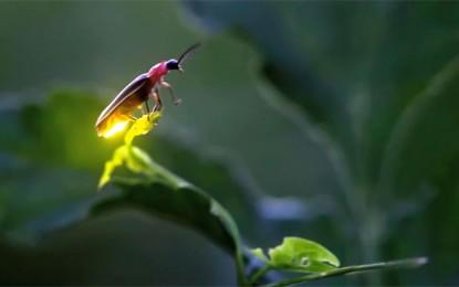 God and Lightning Bugs