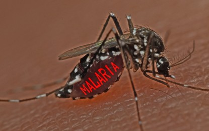 Human guinea pigs paid to expose themselves to mosquitoes that may carry malaria